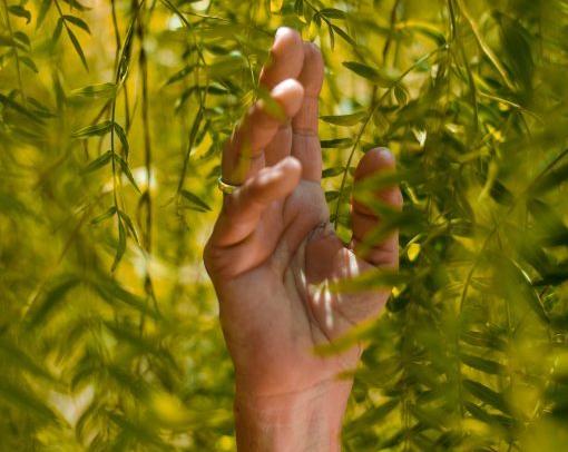 Rafael Albornoz 'hand up' image